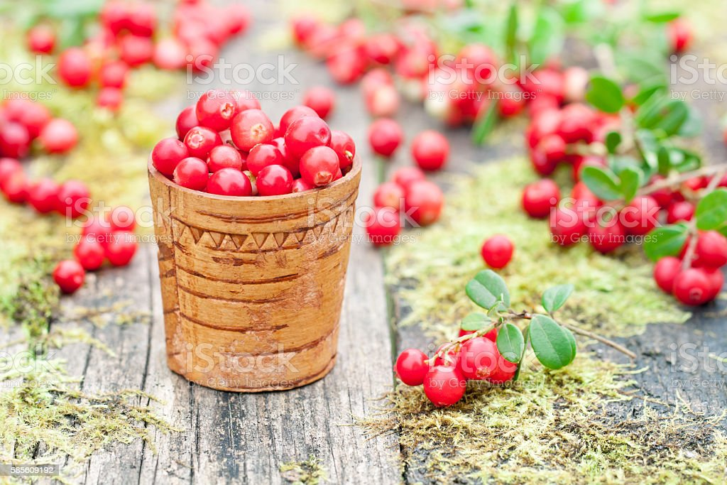 macro  image of fresh cowberry on the old moss table stock photo