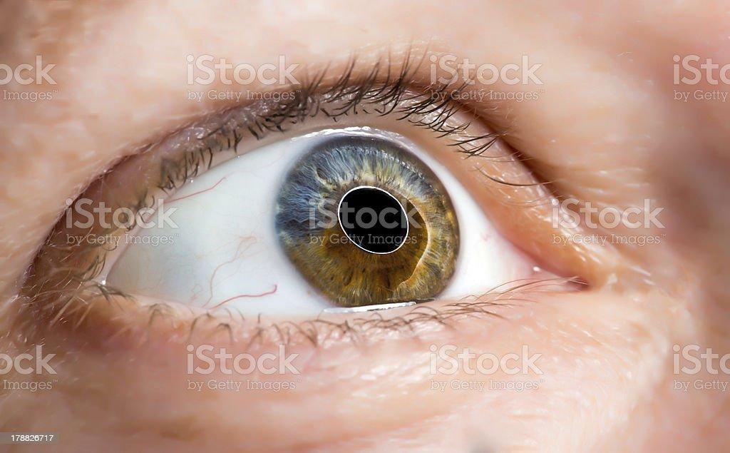 Macro image of human eye royalty-free stock photo