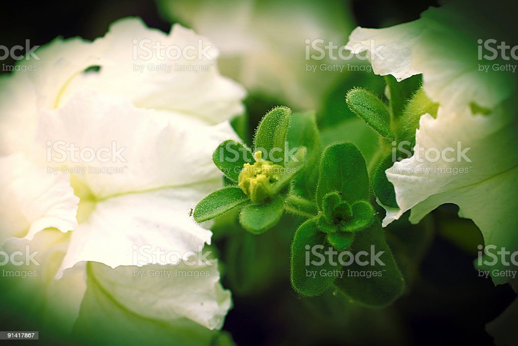 macro leaf and flower royalty-free stock photo