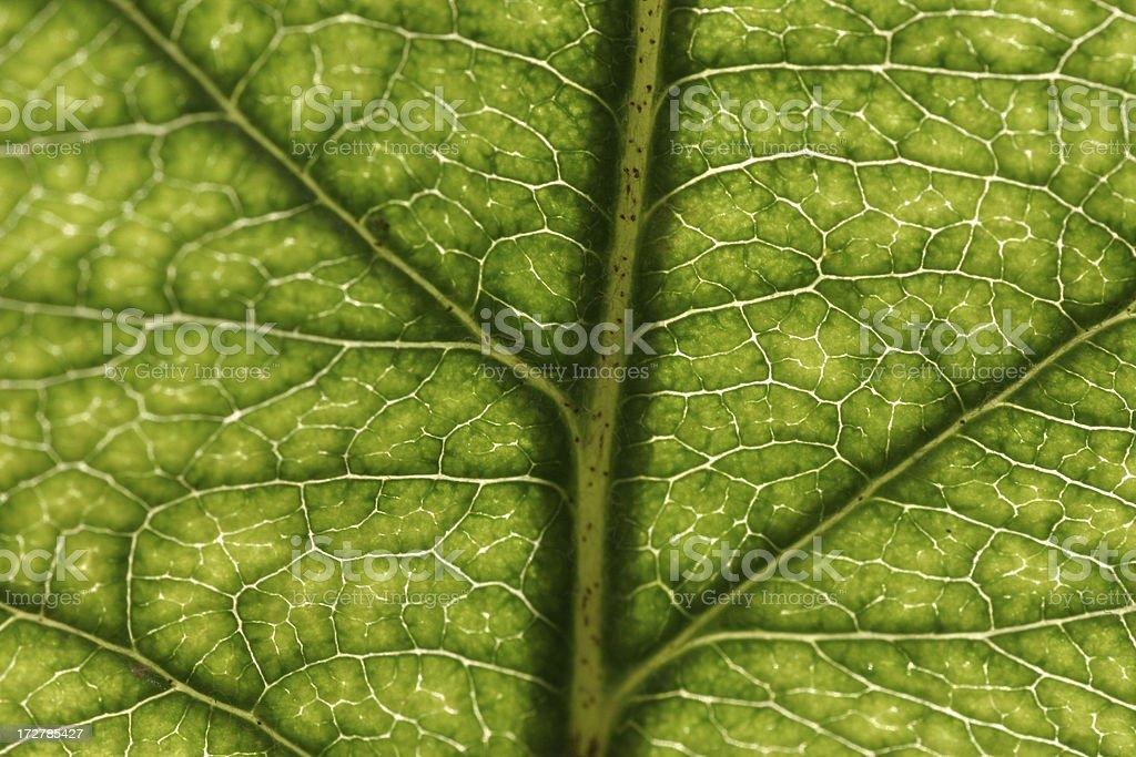 Macro leaf structure stock photo