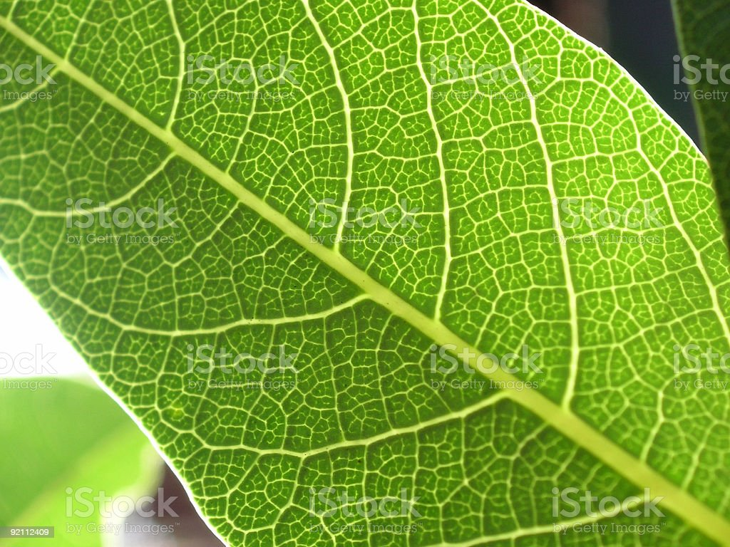 macro leaf texture 2 royalty-free stock photo