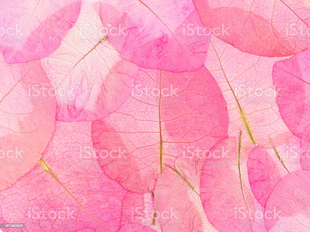 macro leaves background stock photo