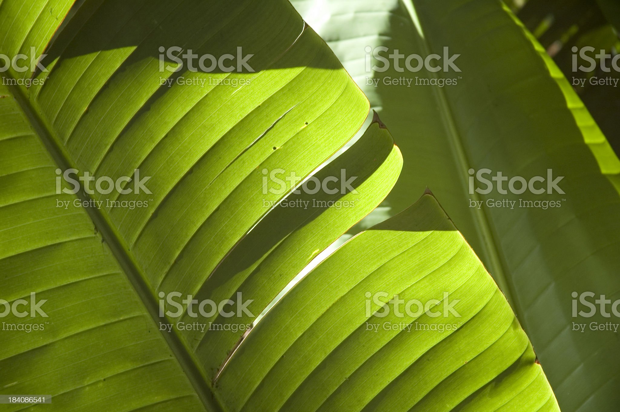 Macro leaves royalty-free stock photo
