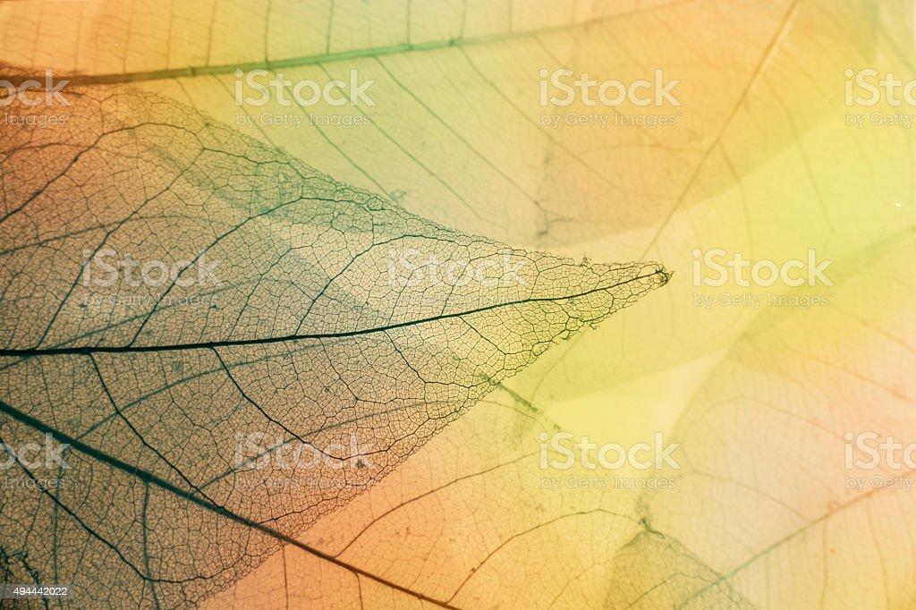 Macro leaves stock photo