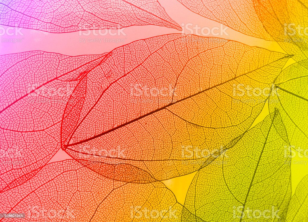 Macro leaves stock photo
