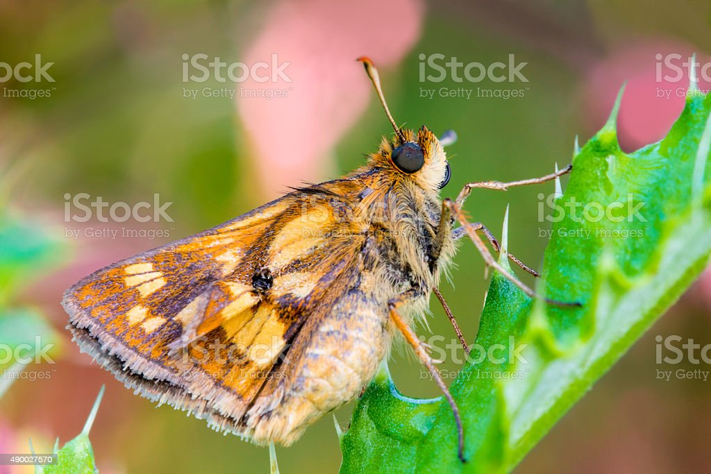 Macro Moth stock photo