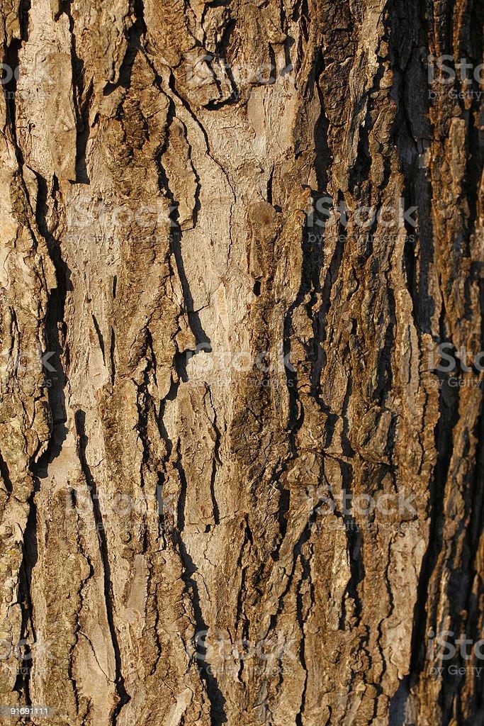Macro Oak Tree royalty-free stock photo