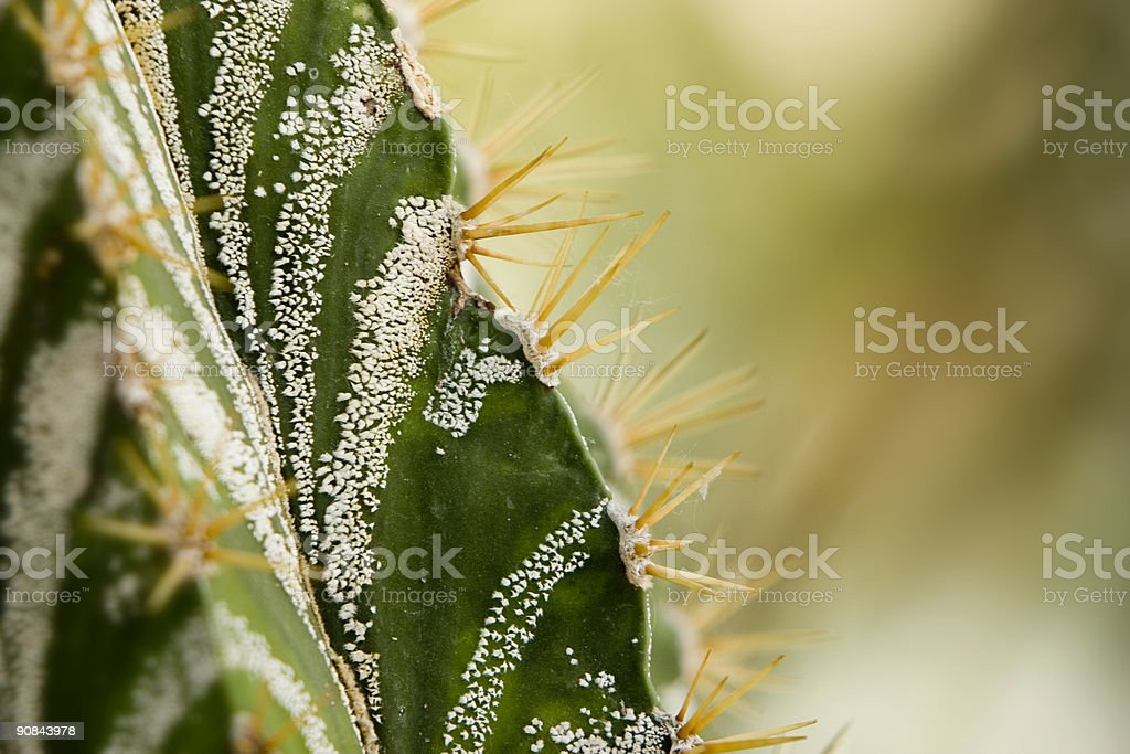 macro of a cactus royalty-free stock photo