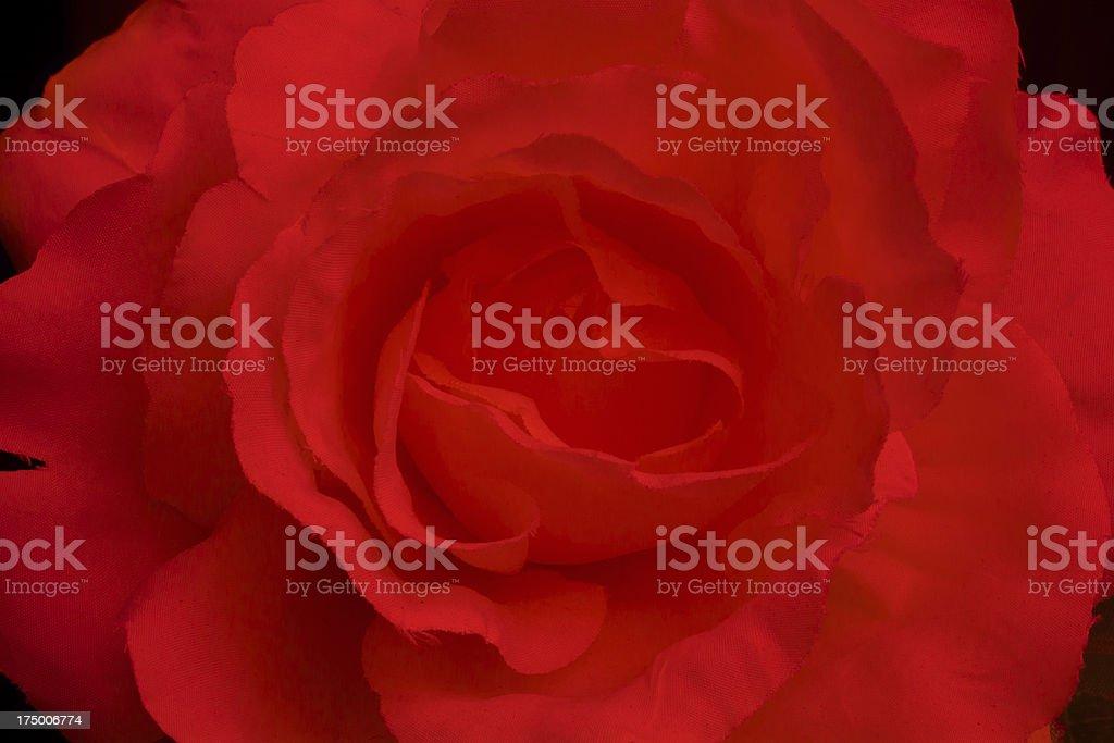 Macro of a rose royalty-free stock photo