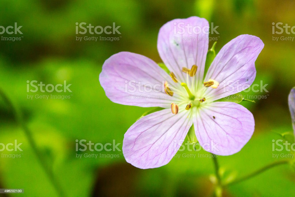 Macro of a Small Flower stock photo