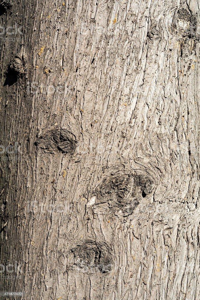 Macro of Bark of Tree stock photo
