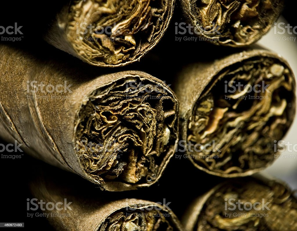 Macro of brown dry cigarettes or cigarillo as addiction concept stock photo