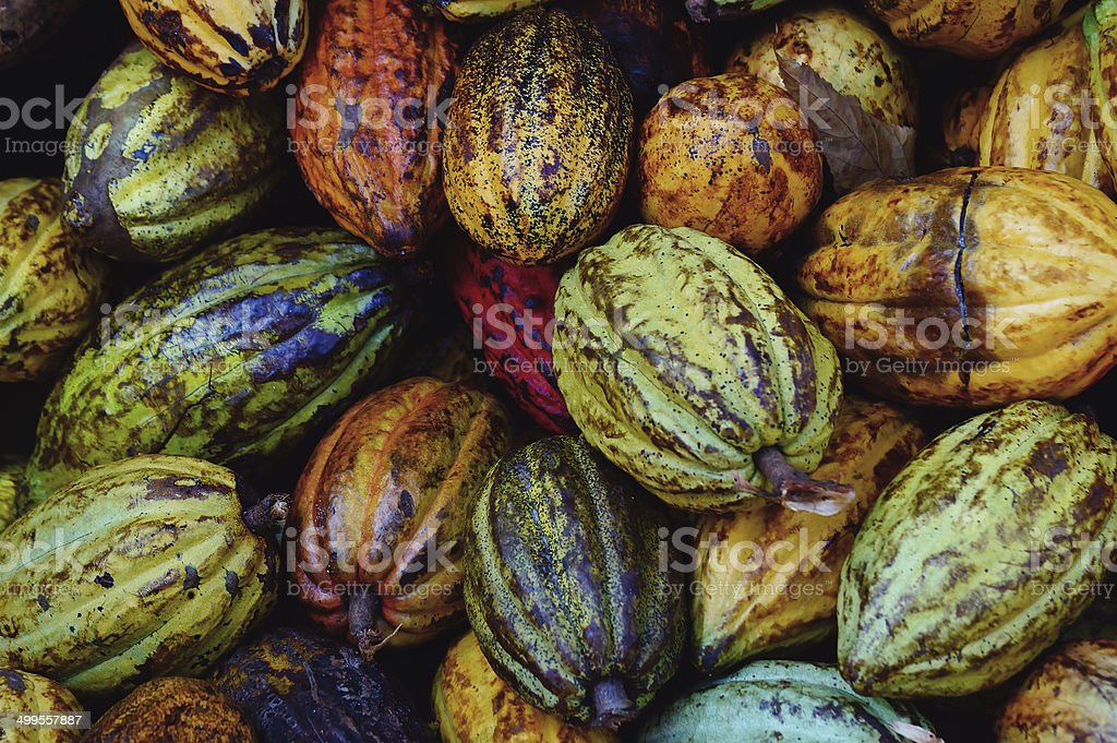 Macro of Cocoa pods from Samana, Dominican republic stock photo