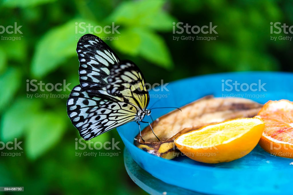 Macro of colorful butterfly on sliced orange stock photo
