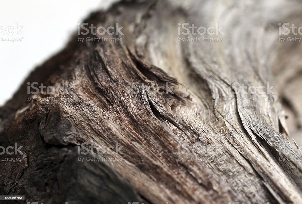 Macro of driftwood.  Color image.  Selective focus. royalty-free stock photo