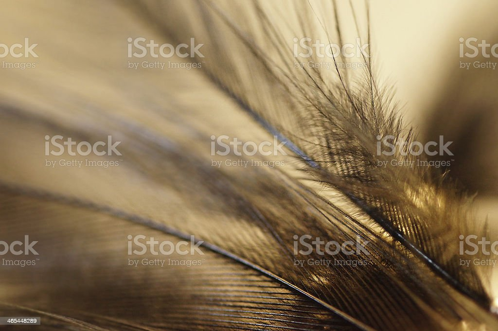 Macro of Fluffy feather details royalty-free stock photo