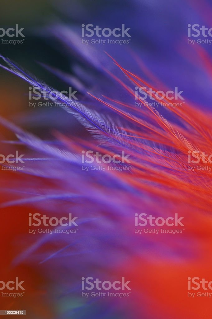 Macro of Fluffy multicolor feather details royalty-free stock photo