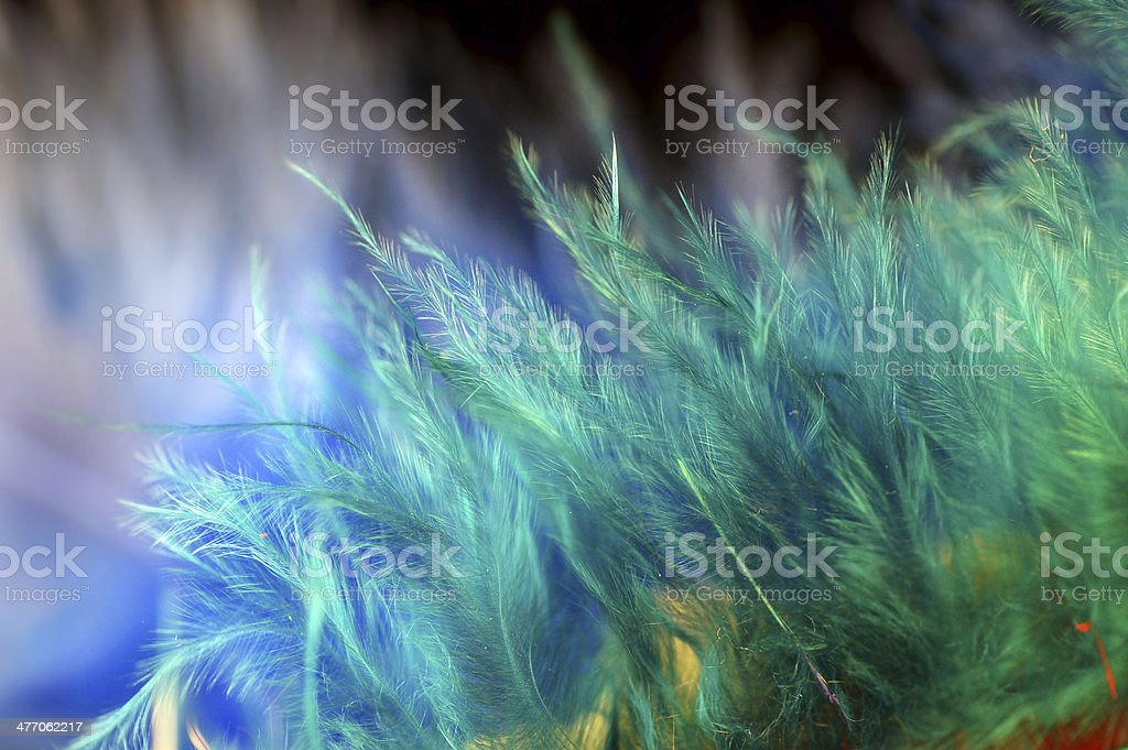 Macro of Fluffy multicolor feather details stock photo