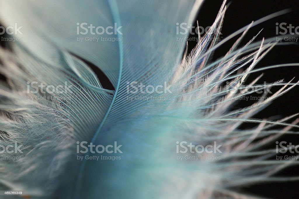Macro of Fluffy turquoise feather details stock photo