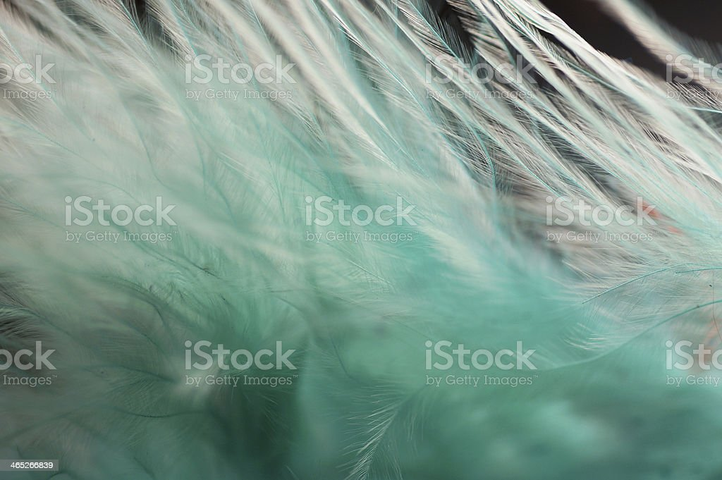 Macro of Fluffy turquoise feather details royalty-free stock photo
