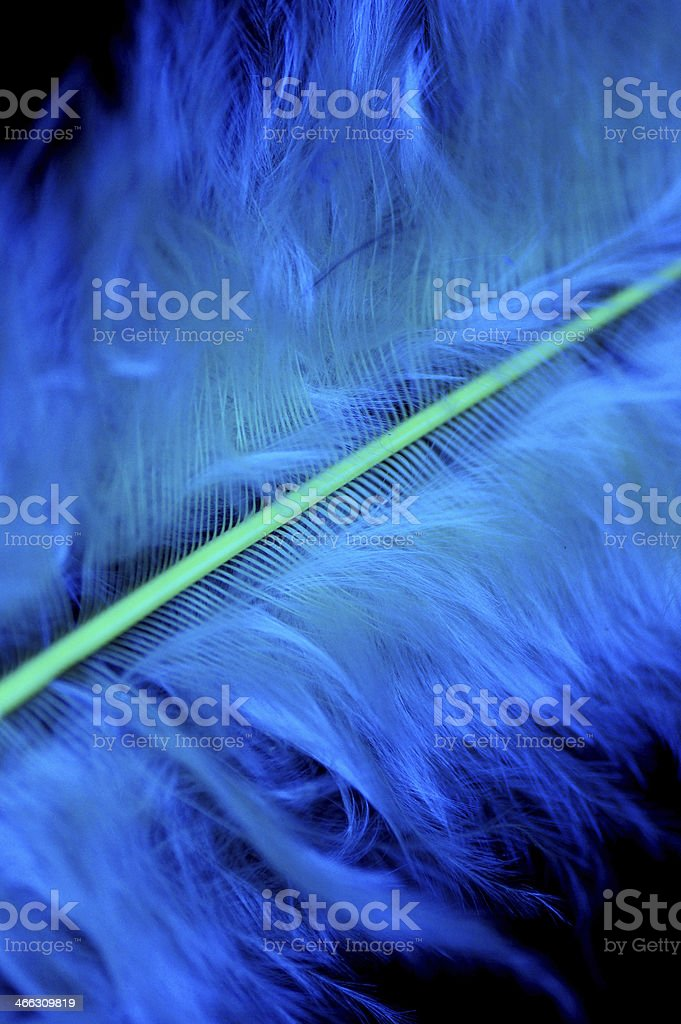 Macro of Fluffy vibrant blue feather details royalty-free stock photo