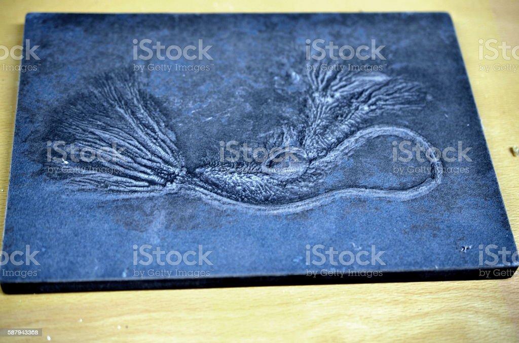 macro of fossilized sea lilly on dark slate rock stock photo