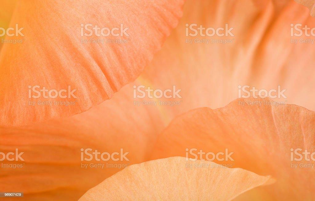 Macro of gladiolus petals stock photo