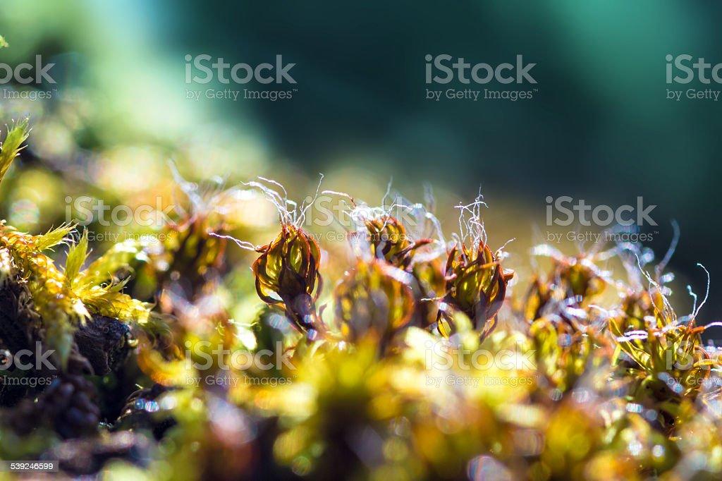 Macro of green and brown fresh moss stock photo