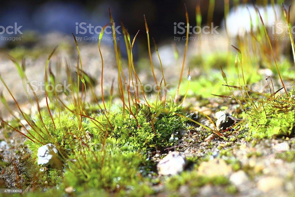 Macro of green moss stock photo
