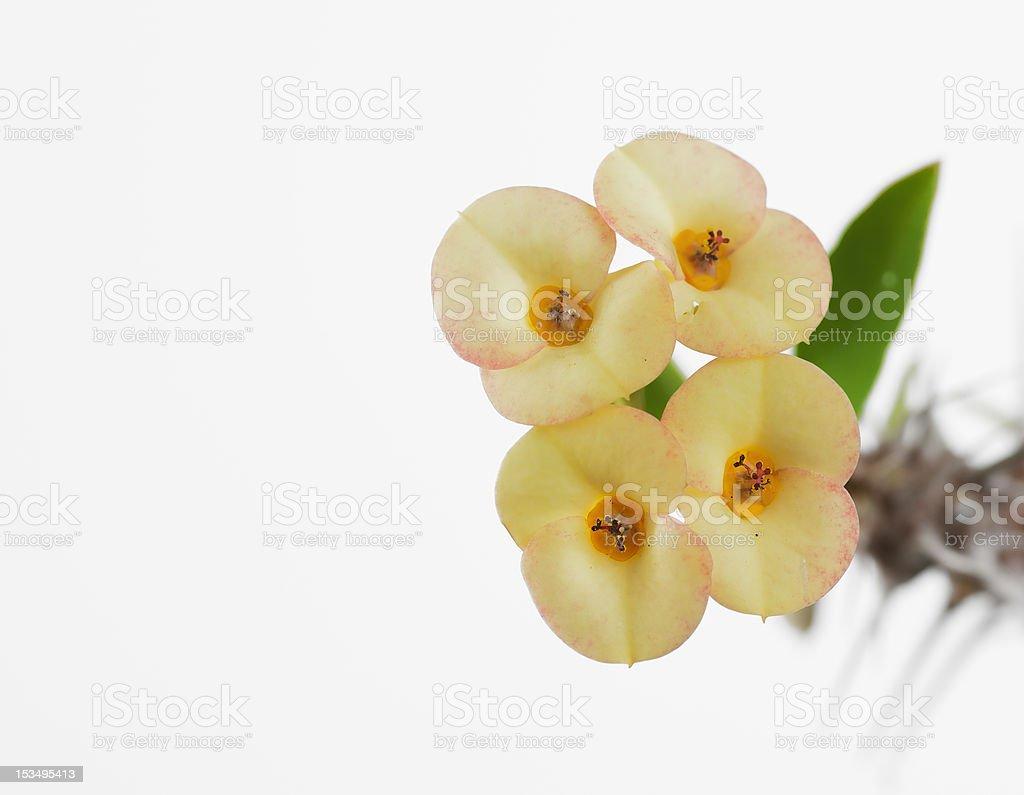 little kwiaty makro zbiór zdjęć royalty-free