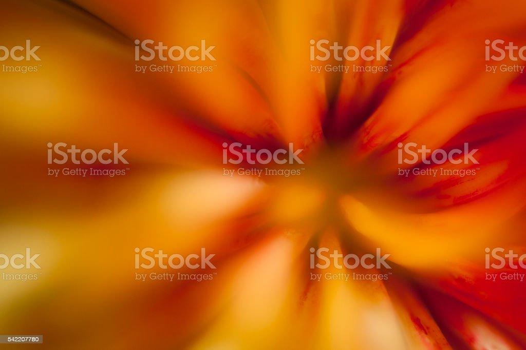 Macro of Orange Mum Flower stock photo