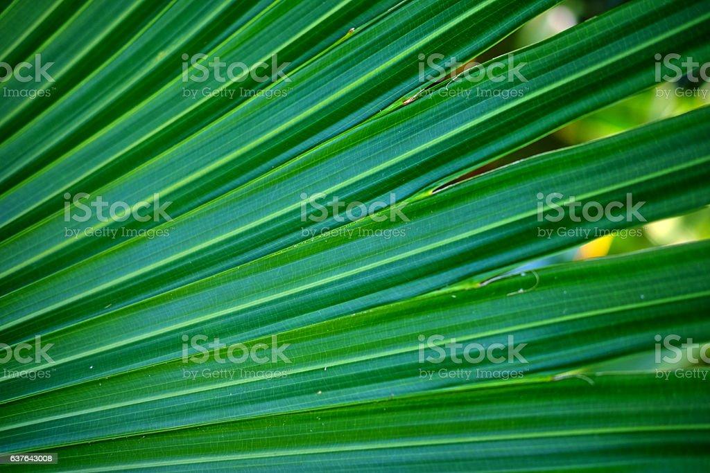 Macro of palm leaf stock photo