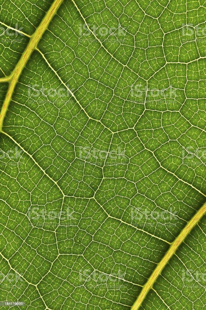 macro of plant leaf royalty-free stock photo