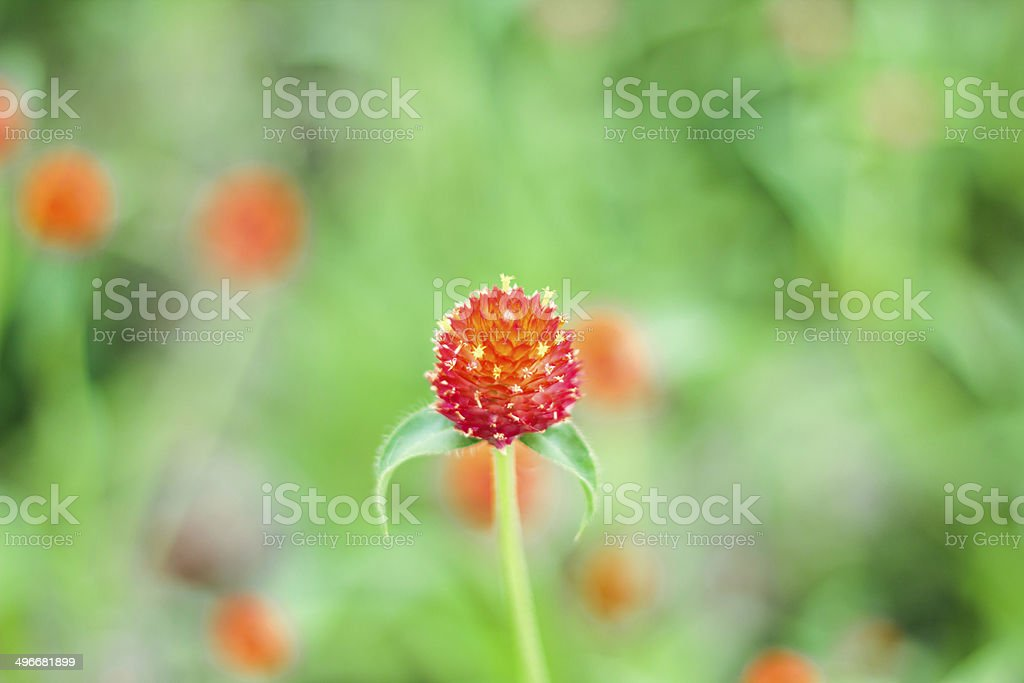 Macro of  red flower royalty-free stock photo