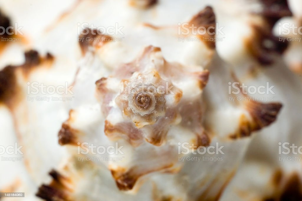Macro de conchas do mar. foto royalty-free