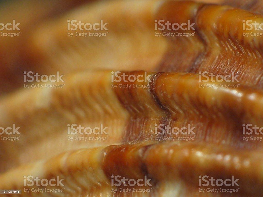Macro of shell stock photo