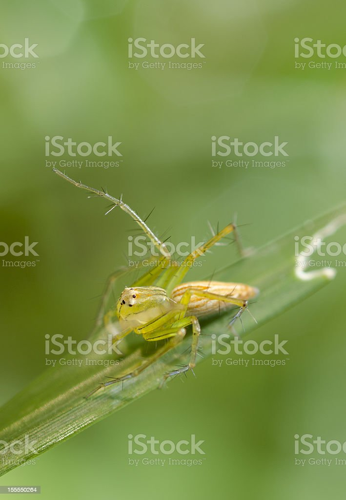 Macro Of Spider On The Grass royalty-free stock photo