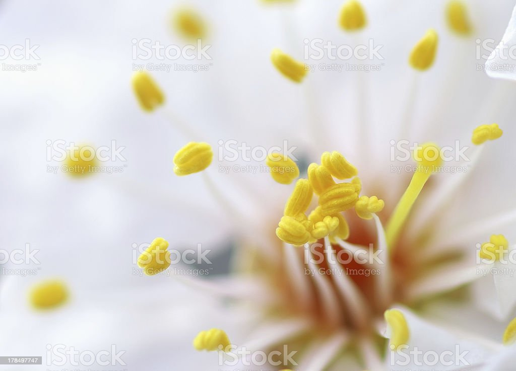 Macro of spring flower royalty-free stock photo