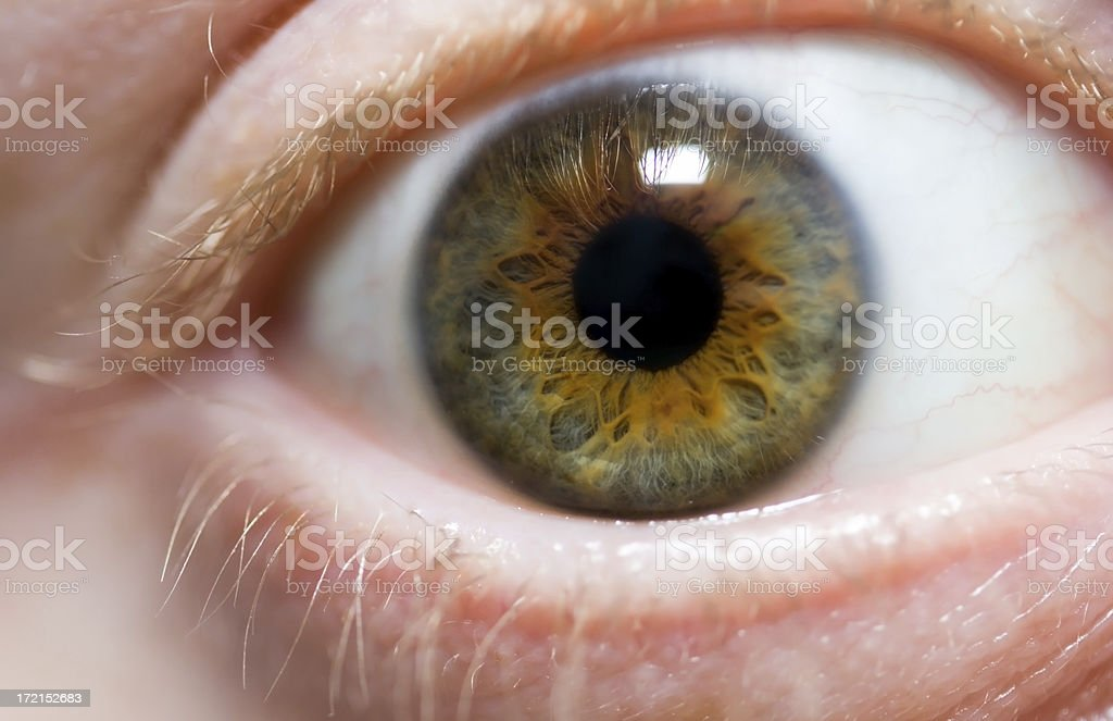 Macro of the human eye stock photo