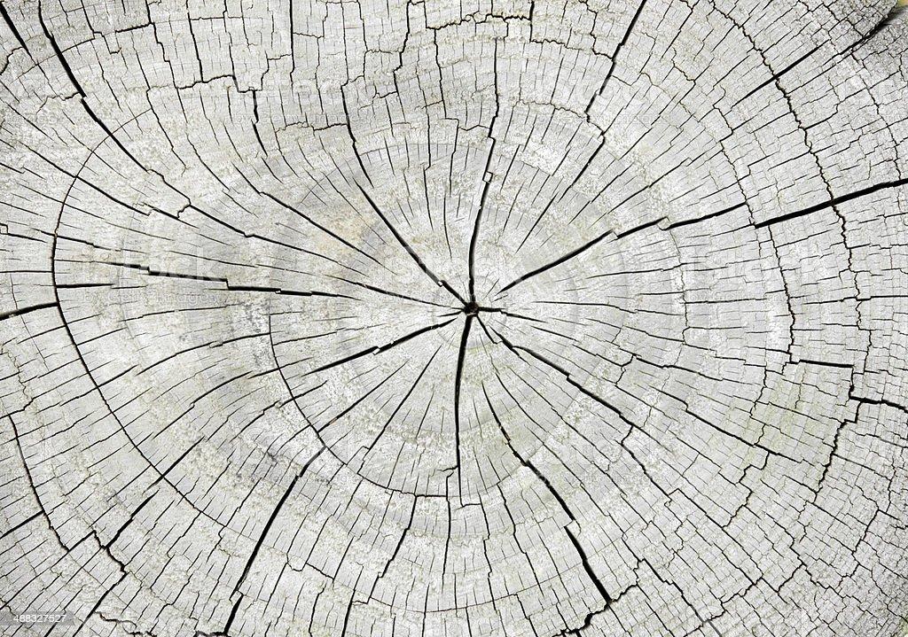 Macro  of   tree  cross section  background stock photo
