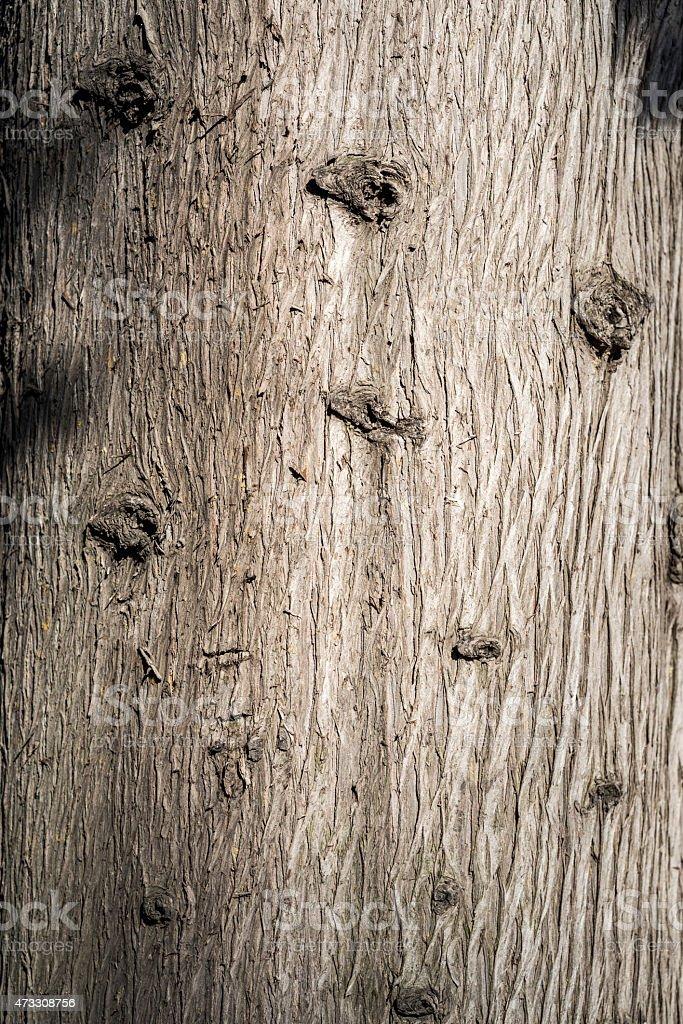 Macro of Tree Trunk stock photo