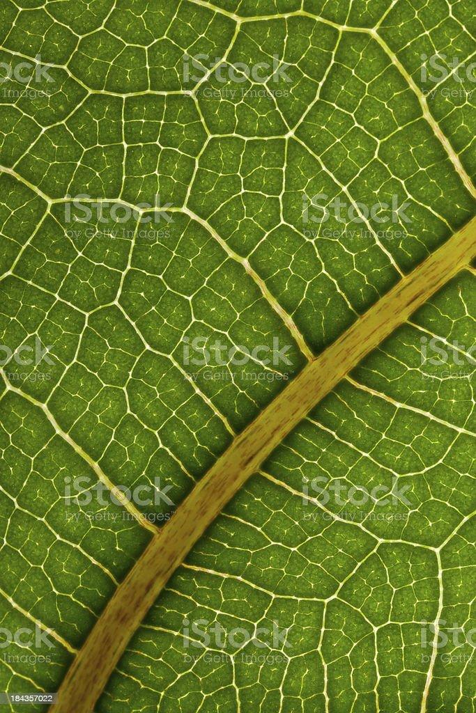 macro of vivid leaf stock photo
