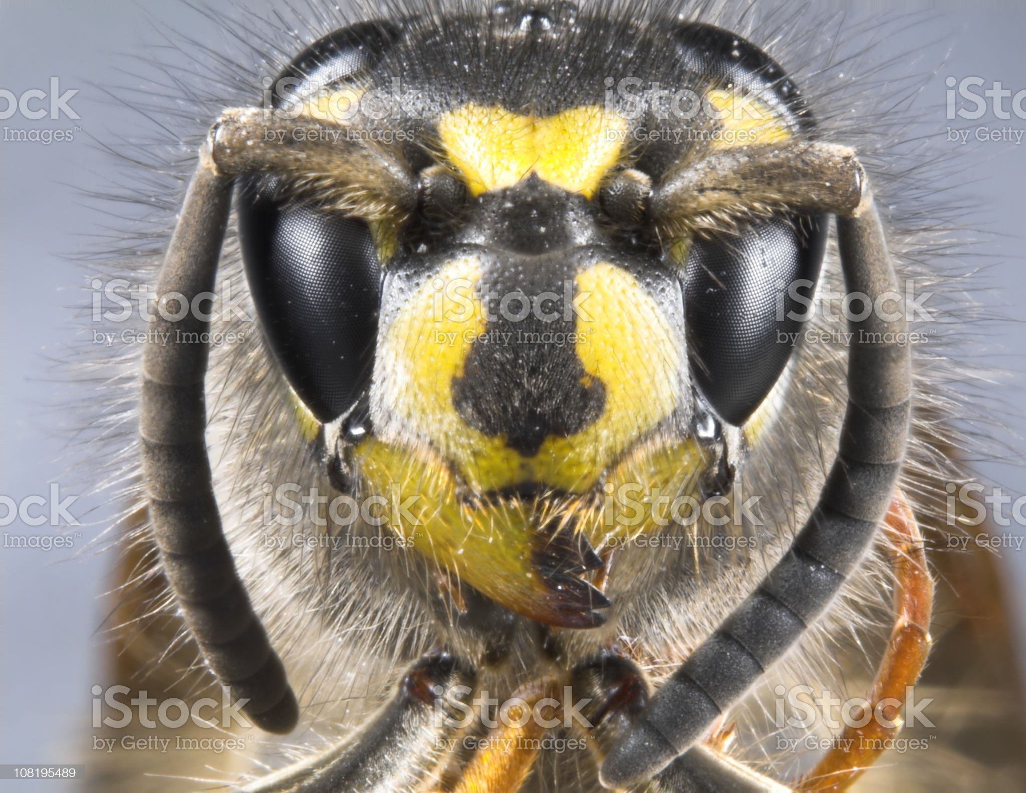 Macro of Wasp Head royalty-free stock photo