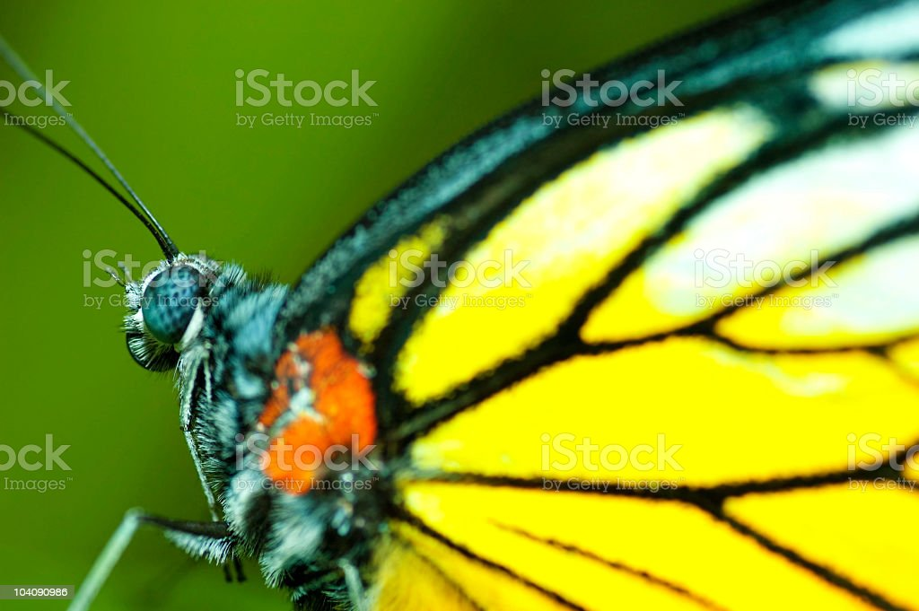 Macro on butterfly royalty-free stock photo