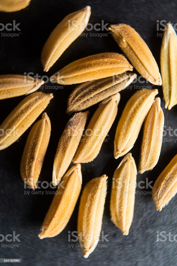 Macro paddy on background stock photo