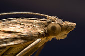 Macro Photo of a small moth