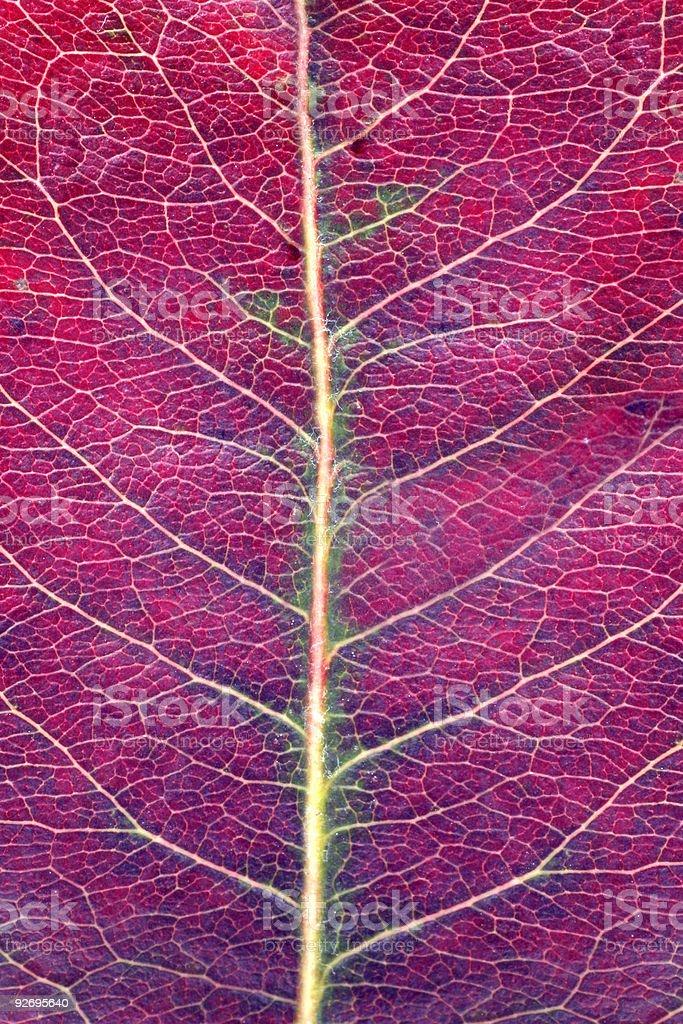 Macro photo of fallen autumn leav royalty-free stock photo
