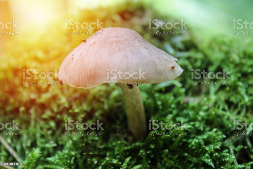 Macro photo of mushroom with strong light stock photo