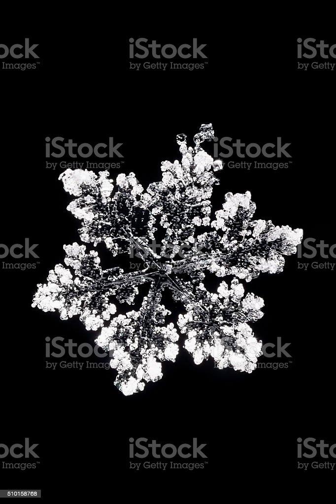 Macro photo of snowflake on a black background stock photo