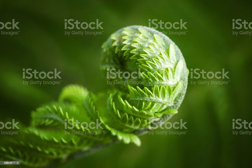 Macro photo of young fern sprout with selective focus stock photo